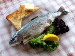 Fisch ist reich an Protein